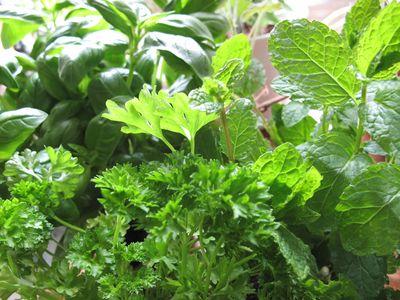 basil, parsley, mint