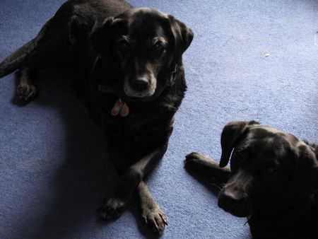 Bess and Mollie