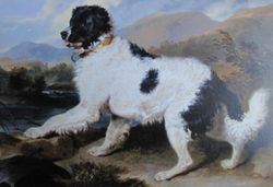 Lion: A Newfoundland Dog, Landseer