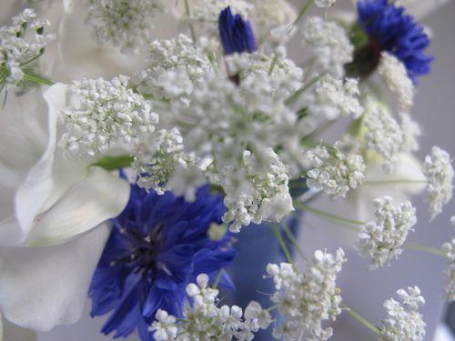 Blue & white 1