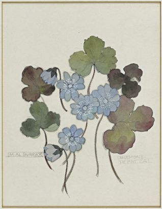 Hepatica Mary Newbery Sturrock