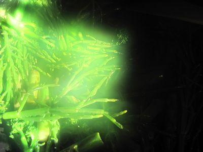 Greens II