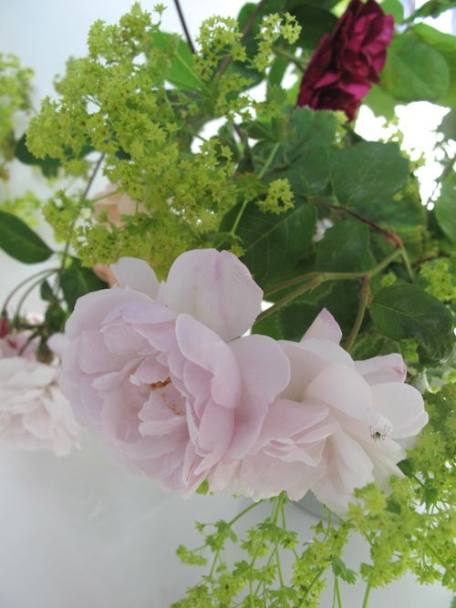 Roses, lady's mantle
