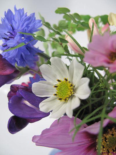 Cosmos, cornflower, sweet pea