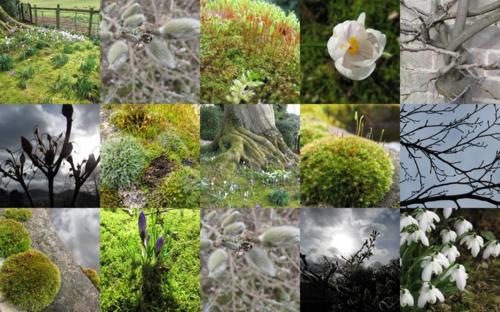 Julia's garden