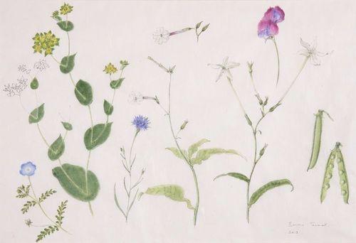 Midsummer Annuals, Emma Tennant