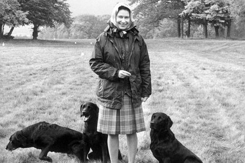 The Queen and her Labradors