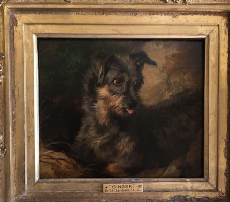 Scott's terrier Ginger, Landseer
