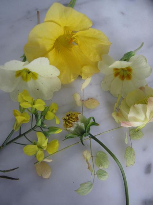 Primrose, nasturtium, trollius, mustard