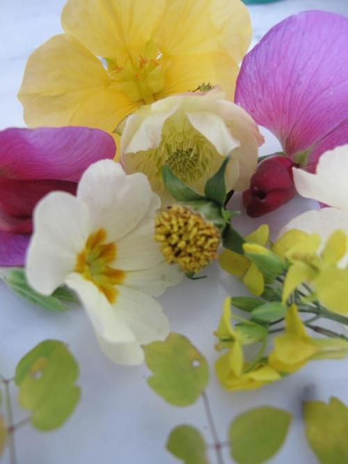 perennial sweet pea, primrose, nasturtium
