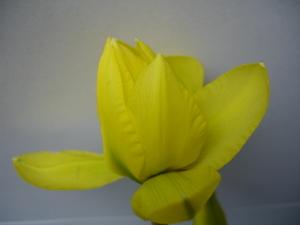 Cornflower_27_084