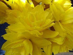 Cornflower_27_116