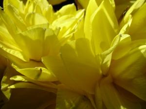Cornflower_27_117