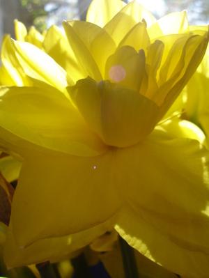 Cornflower_27_118