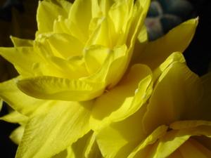 Cornflower_27_120
