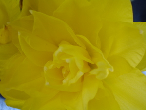 Cornflower_27_122