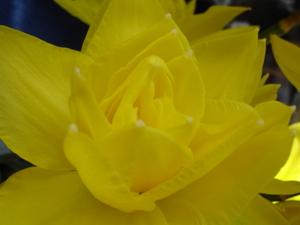Cornflower_27_123