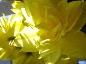 Cornflower_27_124