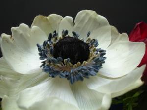 Cornflower_29_005