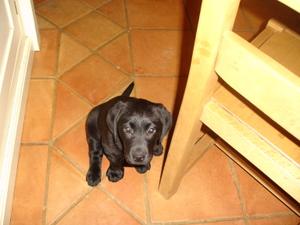Puppy_003
