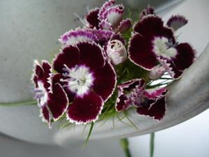 Cornflower_34_090