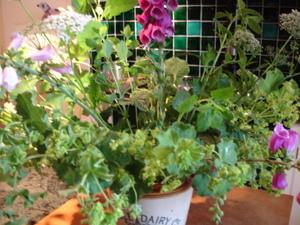 Cornflower_35_021
