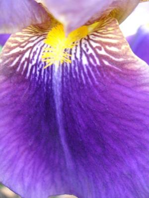 Cornflower_34_192