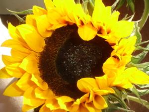 Cornflower_36_226_2