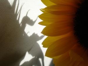Cornflower_36_229