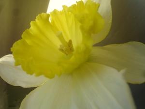 Cornflower_39_212