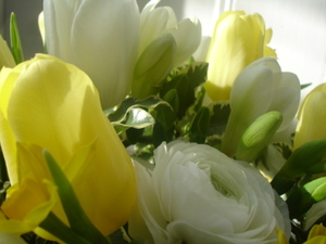 Cornflower_41_158