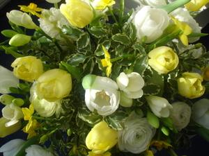 Cornflower_41_159