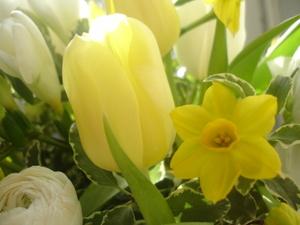 Cornflower_41_162