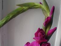 Cornflower_12_003