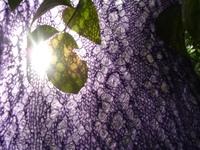 Cornflower_16_032