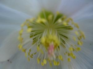 Cornflower_26_010