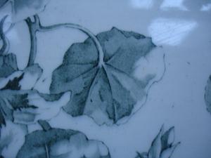 Cornflower_27_043