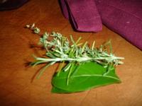 Cornflower_8_018
